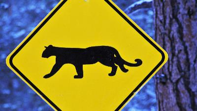 Camp Safety: Mountain Lions