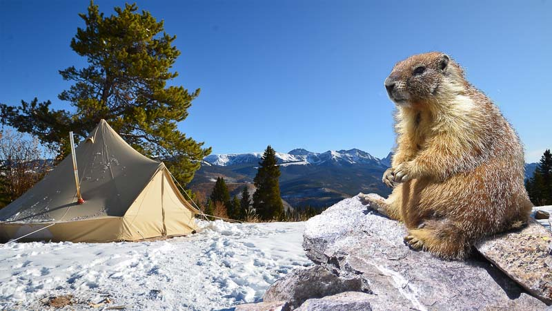 Camping Rodent