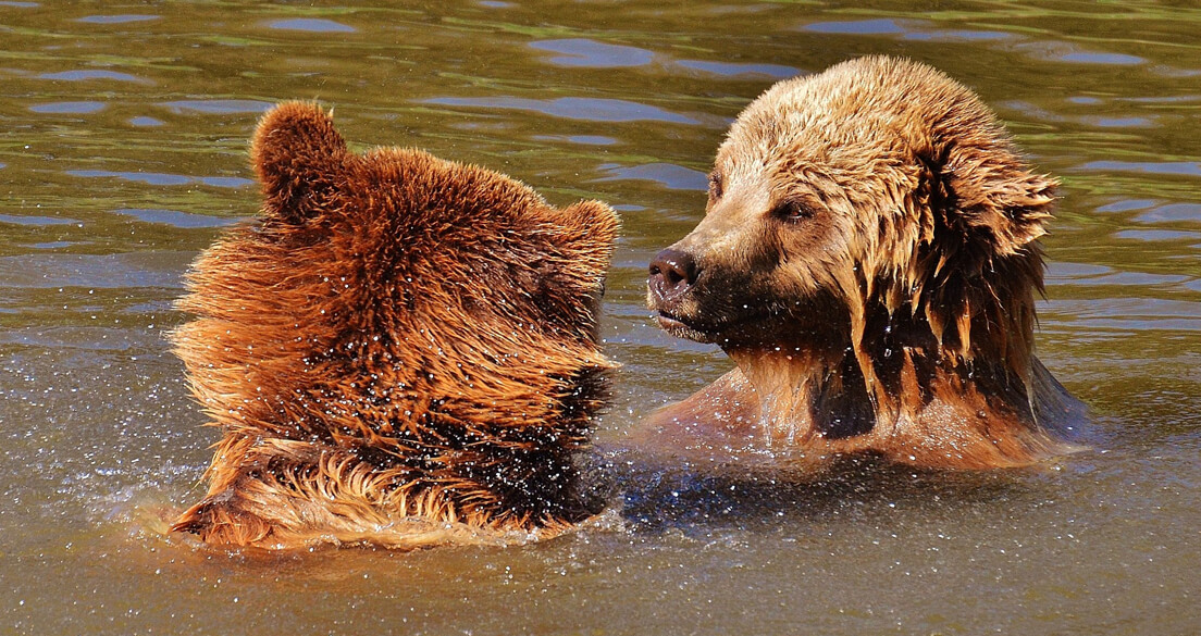 Bear Safety: Camping with Bears